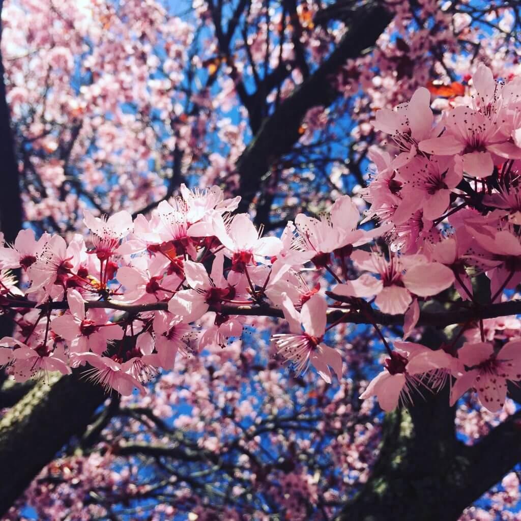 … i per fi la primavera ha arribat a Cerdanya.